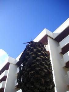 Behandelte Palmen vor dem Vilalaia-Büro